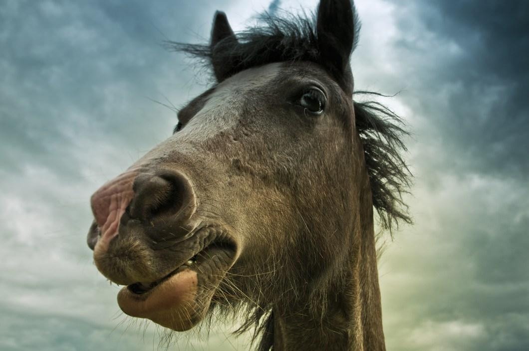 primer plano de un caballo