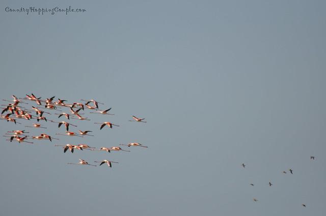 Bird Watching Um Al Quwain 3