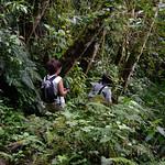 01 Viajfilos en Panama. Sendero Quetzal 24