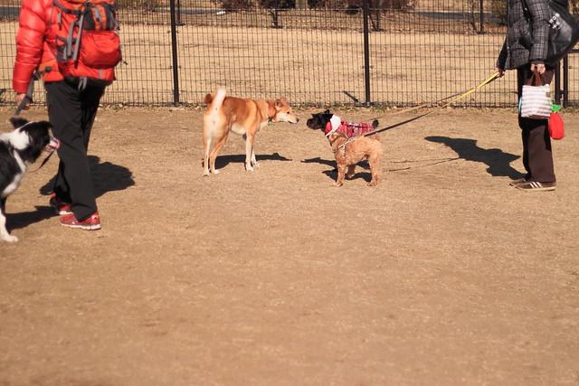 01_14_dog_run_0021