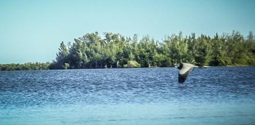 Indian River Paddling-32
