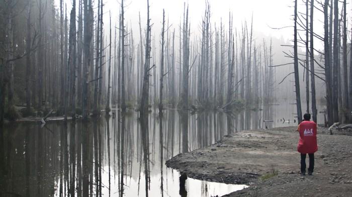 強者tony 活潑亂跳的抵達水漾森林