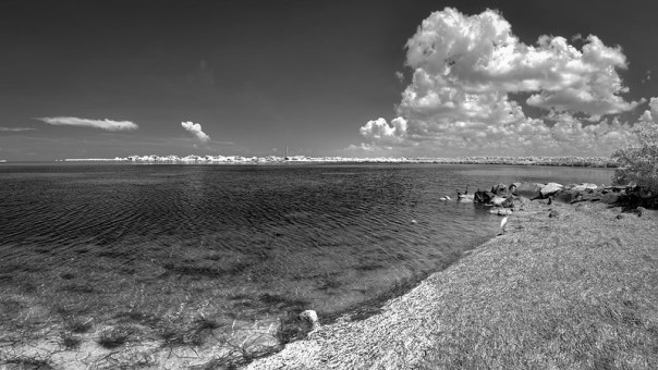 Looking north toward Piney Point from Fred Howard Park in Tampa