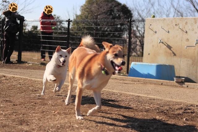 01_14_dog_run_0011