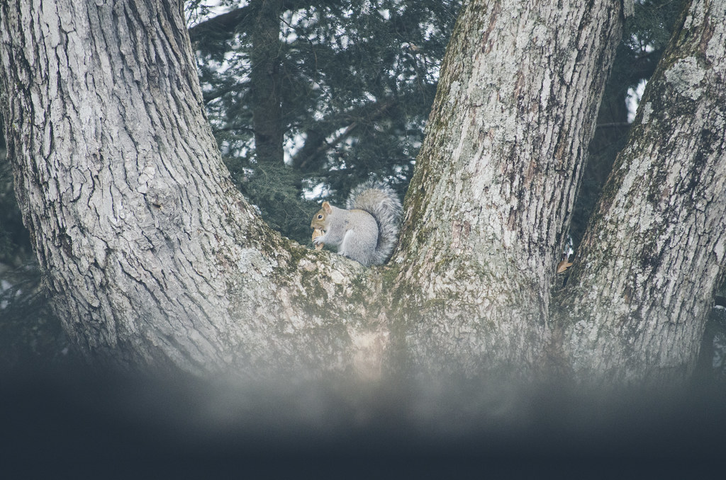 L'écureuil 1