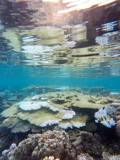 Coral reflections. Togean Islands