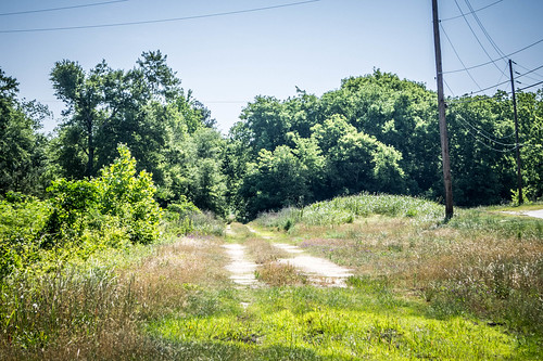Swamp Rabbit through Blackville-005