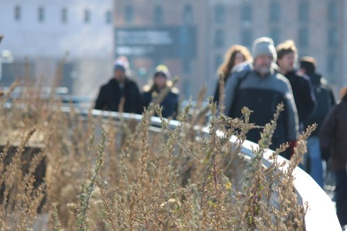 The High Line (Section 3)