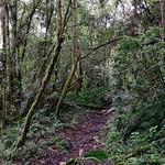 01 Viajfilos en Panama. Sendero Quetzal 28