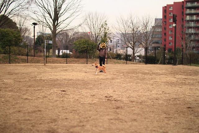 01_14_dog_run_0032