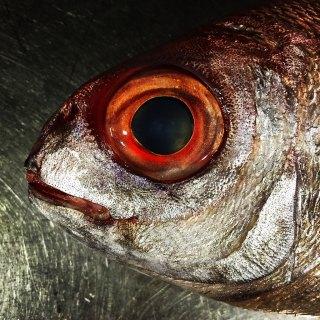 El ojo del besugo