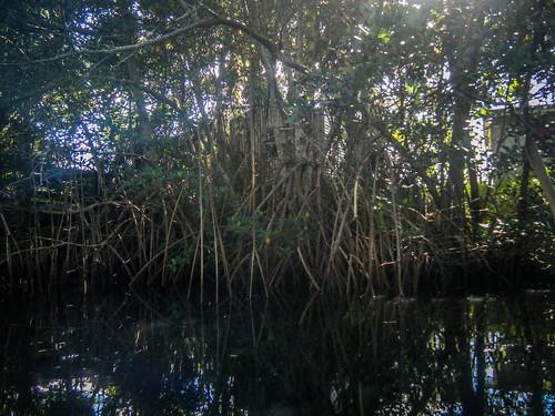 Indian River Paddling-61