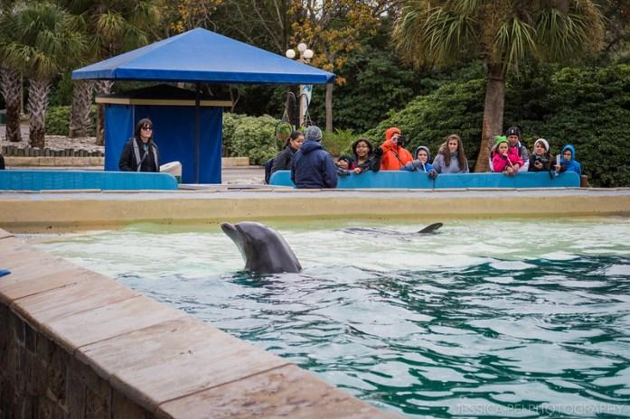 Dolphin Encounter Sea World San Antonio Texas