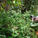 01 Viajfilos en Panama. Sendero Quetzal 20