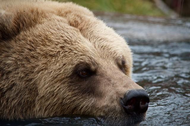 Photo:Kamloops Wildlife Park By:John Biehler