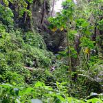 01 Viajfilos en Panama. Sendero Quetzal 37