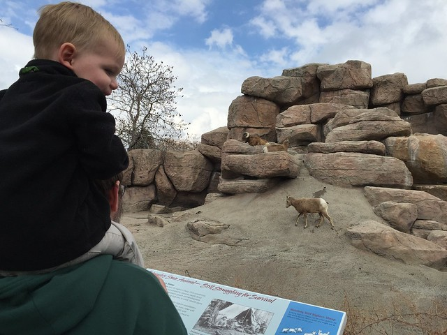 Denver Zoo April 2015