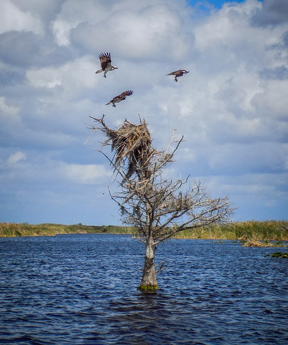 Blue Cypress Swamp Air Boating-21