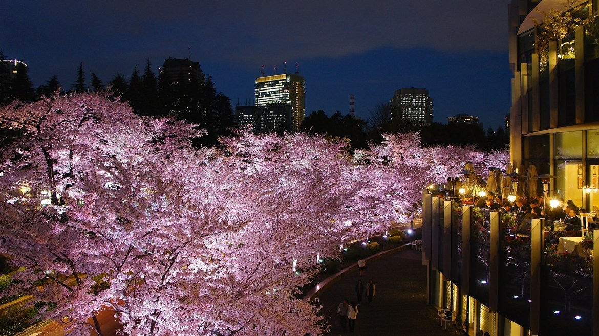 Tokyo Midtown Cherry Blossoms, the good an the bad