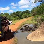 14 Viajefilos en Sri Lanka. Yala 33
