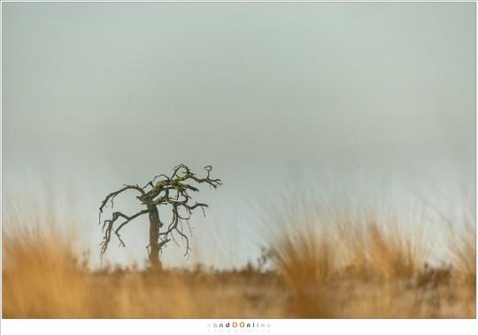 Nog een laatste opname van mijn boom voor het ochtendlicht verandert is in daglicht.
