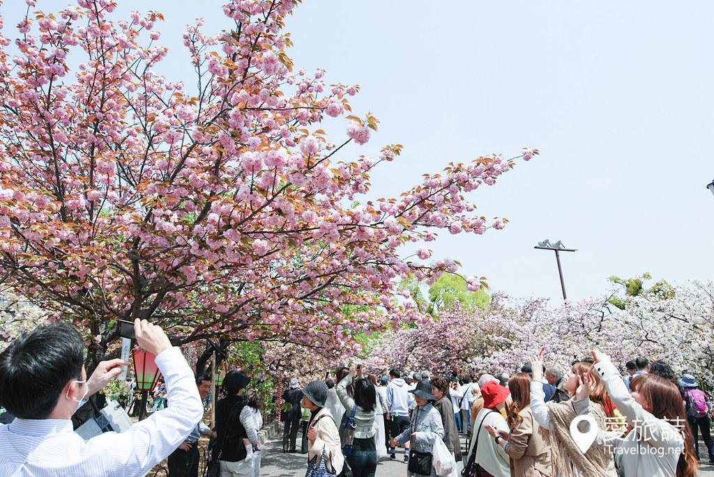 大阪造幣局 櫻花 21