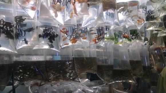 Fish in bags
