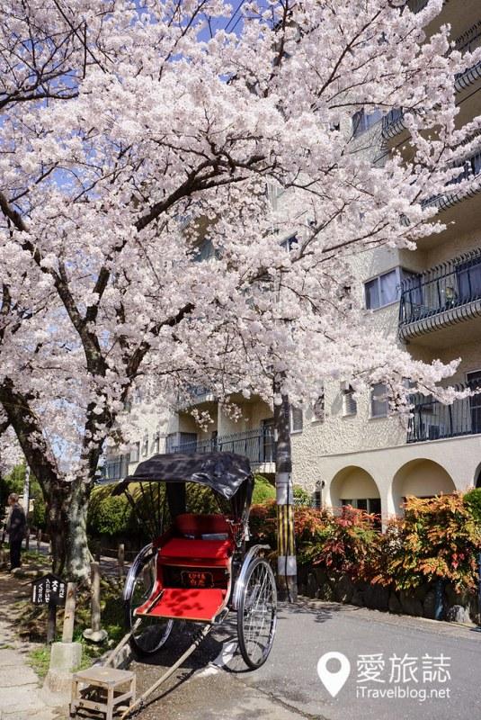 京都赏樱景点 哲学之道 15