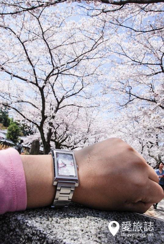 京都赏樱景点 哲学之道 12