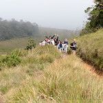 12 Viajefilos en Sri Lanka. Nuwara Eliya 22