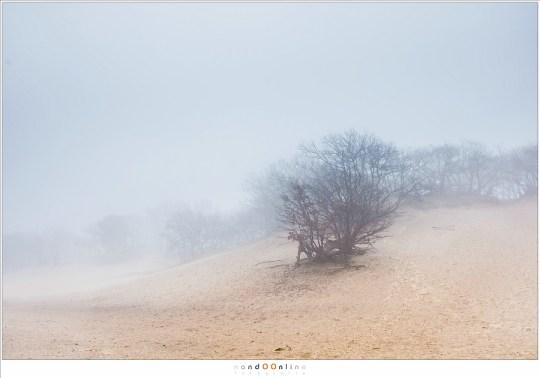 De Bedafse Bergen in de mist