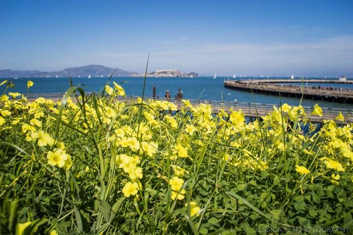 San Francisco Bay yellow flowers