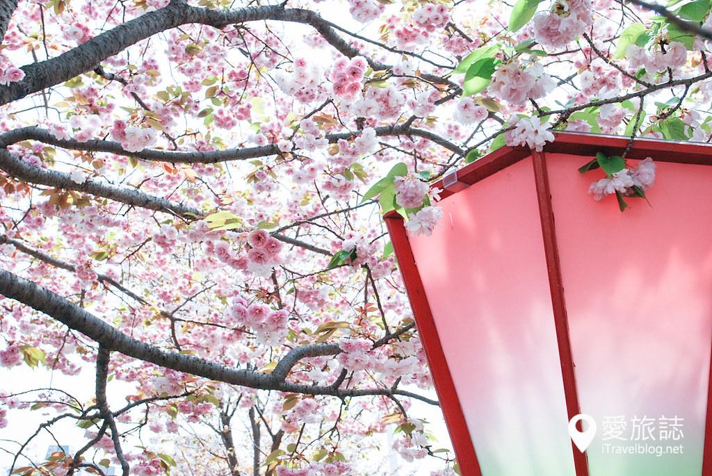 大阪造幣局 櫻花 15