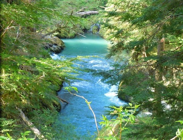 Quinault River Near Pony Bridge