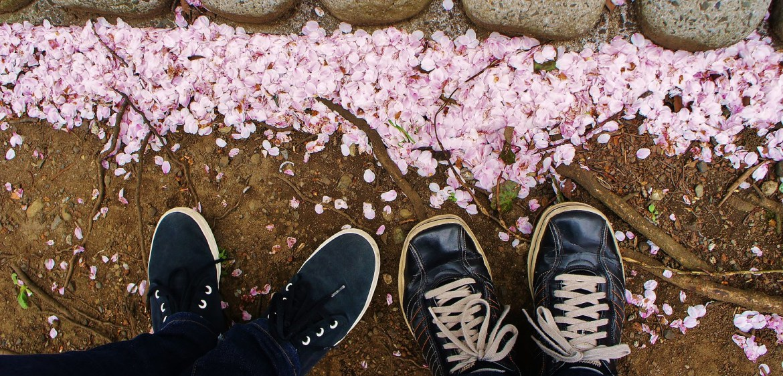 """Sakura """"fallen"""" Petals at our feet"""
