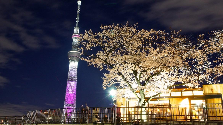 Tokyo Skytree and Cherry Blossom illumination (Sakura)