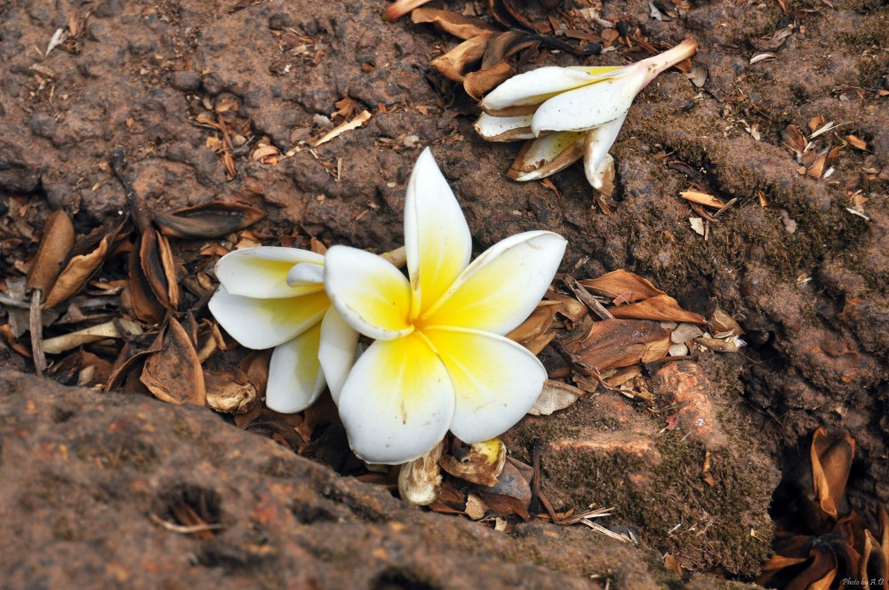 Loanh quanh Wat Phou cho đáng 50.000 LAK - P.9 (4/6)