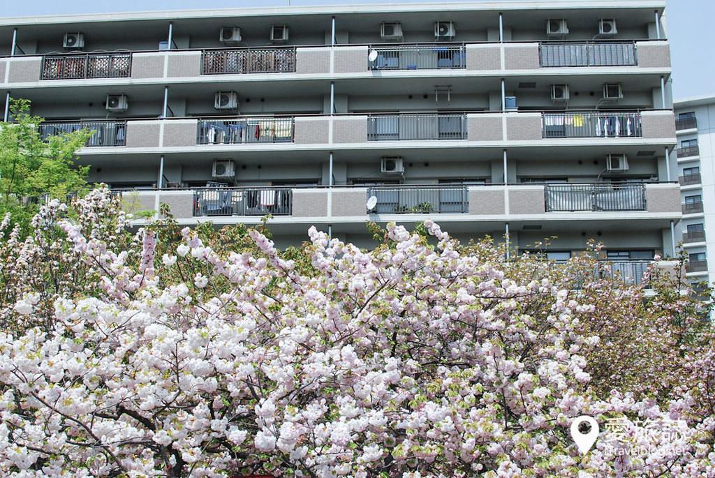 大阪造币局 樱花 45