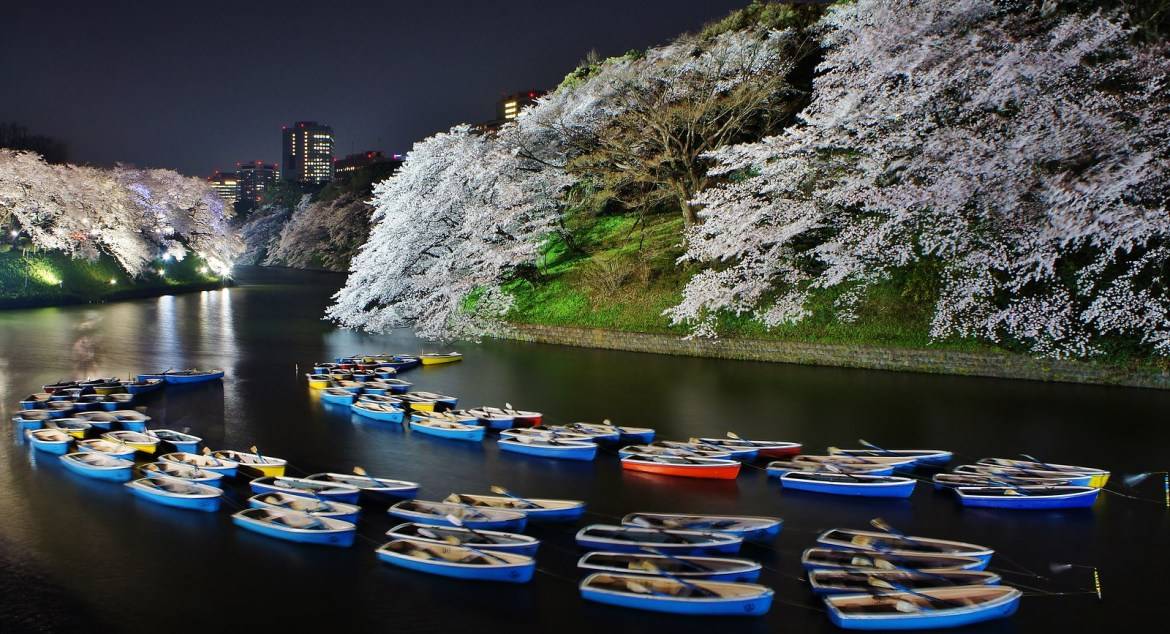 Surreal boats floating at Chidorigafuchi Cherry blossom illumination in 2015