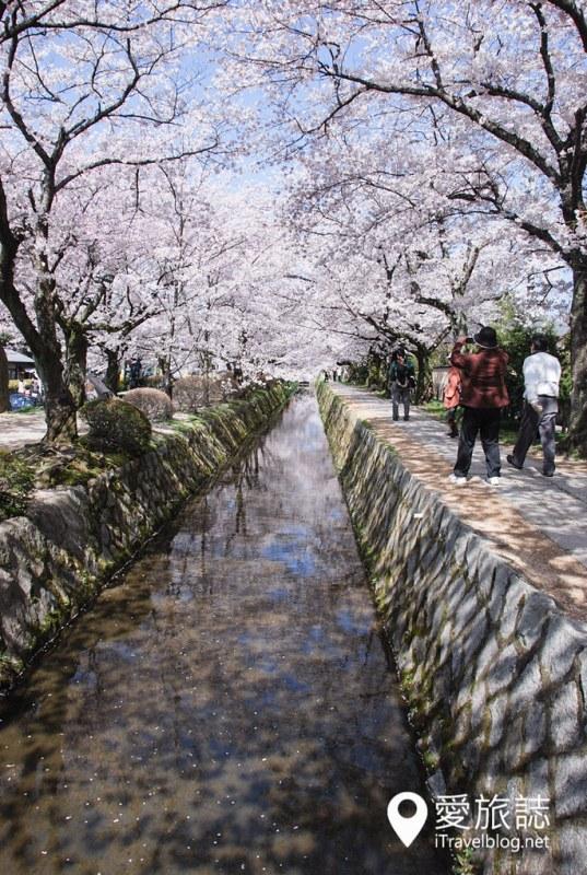 京都赏樱景点 哲学之道 13
