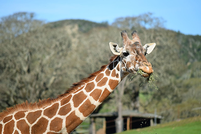 Safari West | Santa Rosa, CA