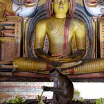 08 Viajefilos en Sri Lanka. Dambulla 26
