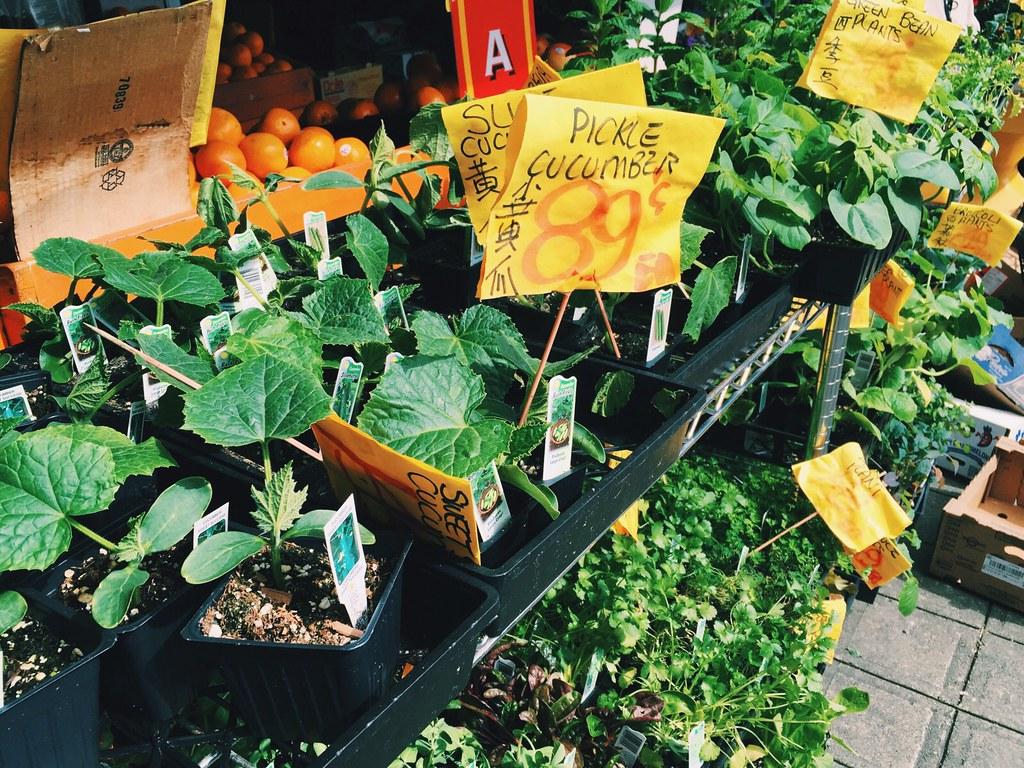 Summer Vegetable Garden: Shopping