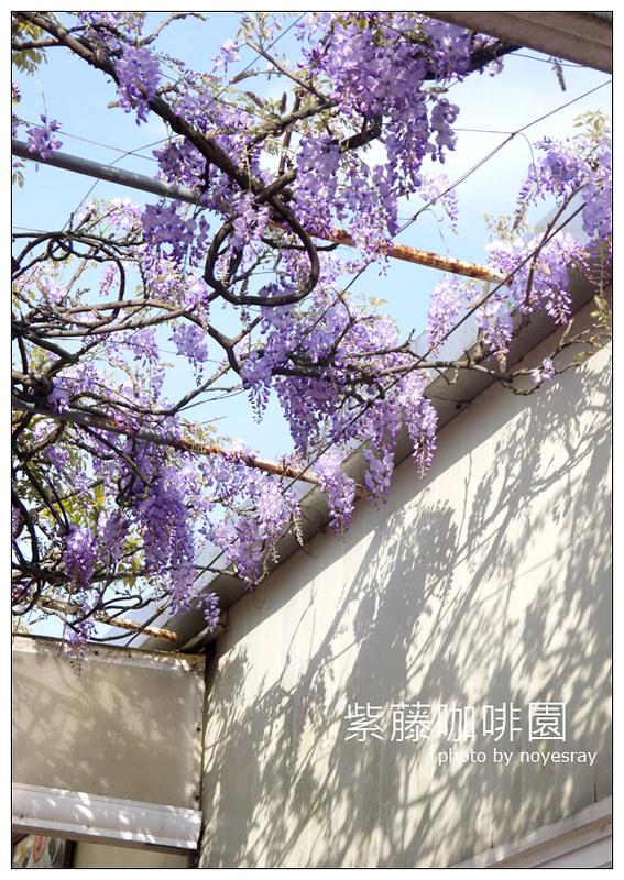 紫藤咖啡園 18