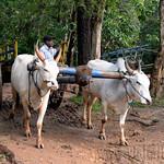 07 Viajefilos en Sri Lanka. Pueblos 08