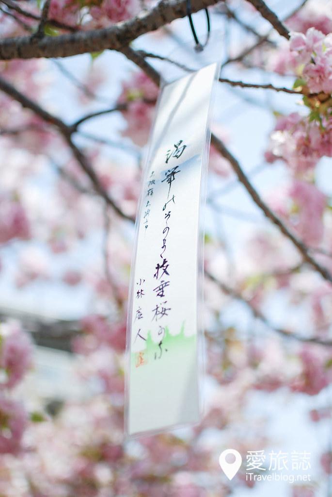 大阪造幣局 櫻花 38