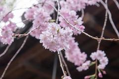 杭全神社-3.jpg
