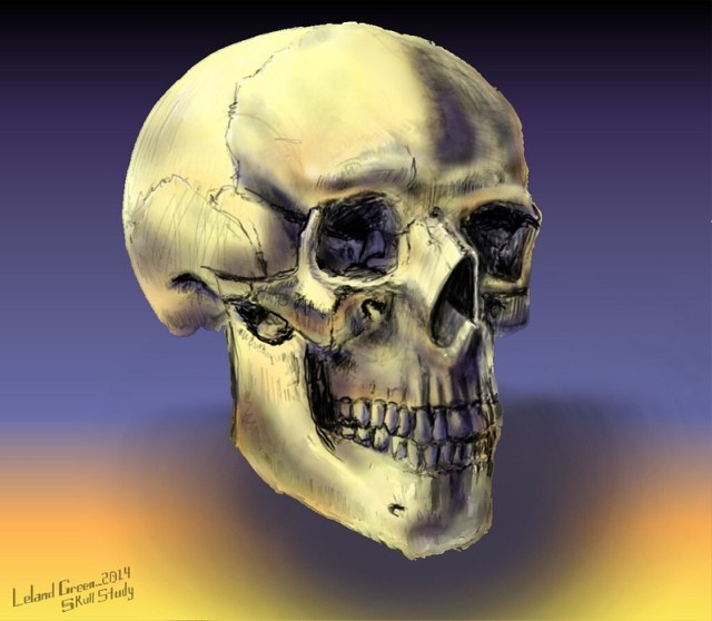 skull_study_20140720_by_lelandgreen