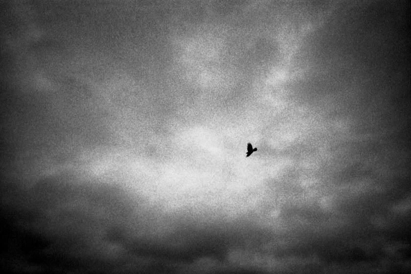 Bird in stormy sky 1998