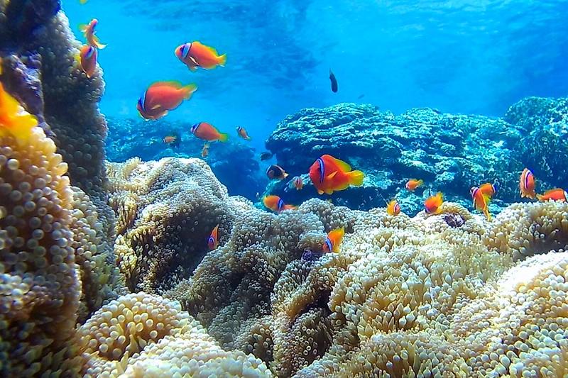 【蘭嶼行程】遇見那五十米深藍!來蘭嶼不參加浮潛真的是可惜了!#蘭嶼浮潛 #蘭嶼水上活動 #snorkeling ...